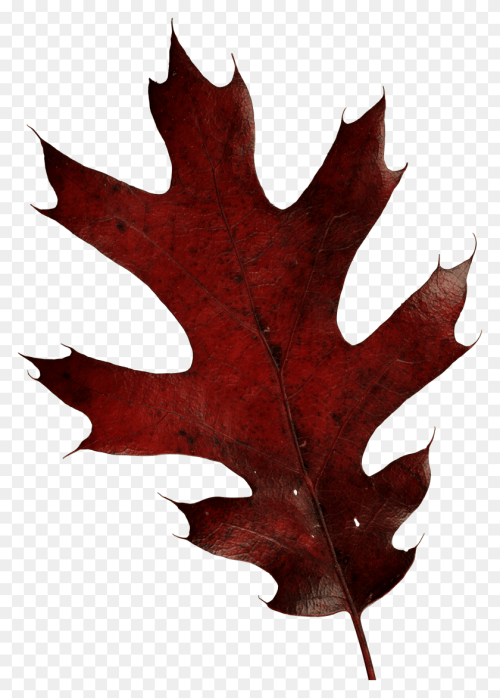 small resolution of autumn leaves autumn leaf autumn leaves leaves tree leaves png