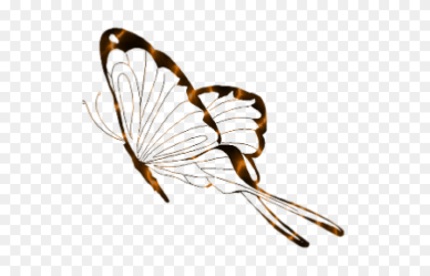 Butterfly Clipart Transparent Background Butterfly Clipart Transparent Stunning free transparent png clipart images free download