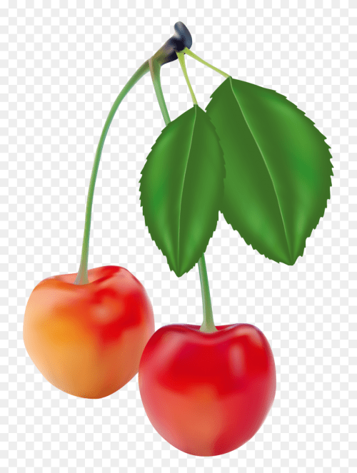 small resolution of cherry clipart free wedding cherries clip art free free inside blueberry clipart black and white