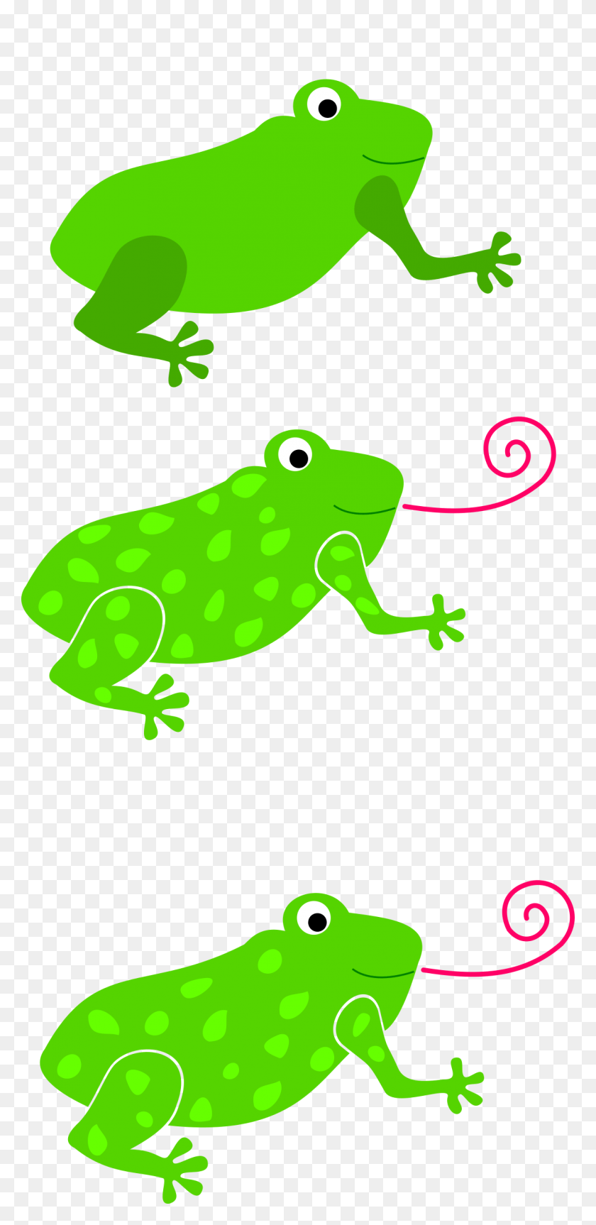 medium resolution of 1123x2400 clipart tree frog clipart