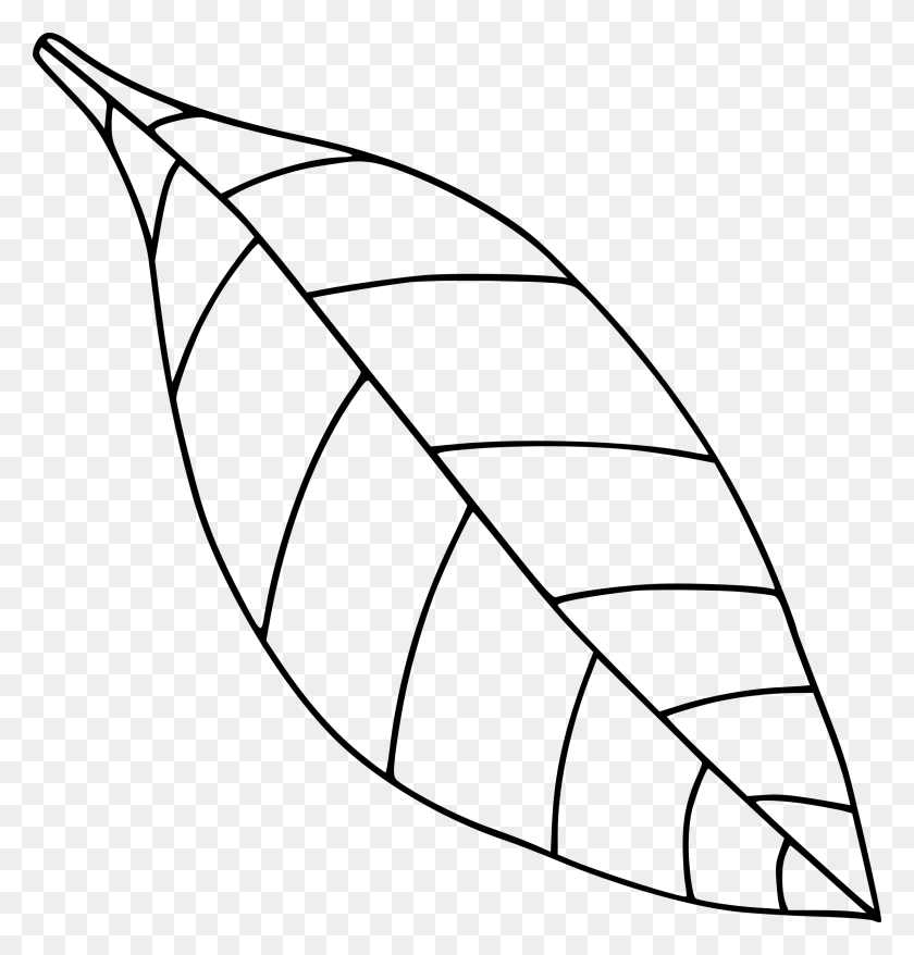 Leaf Clipart Black And White Fall Leaf Template Oak Autumn Leaves Fall Leaves Clipart Black And White Stunning Free Transparent Png Clipart Images Free Download