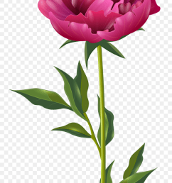 4576x8000 peony clipart swag peony swag transparent free for download floral swag clipart [ 840 x 1423 Pixel ]