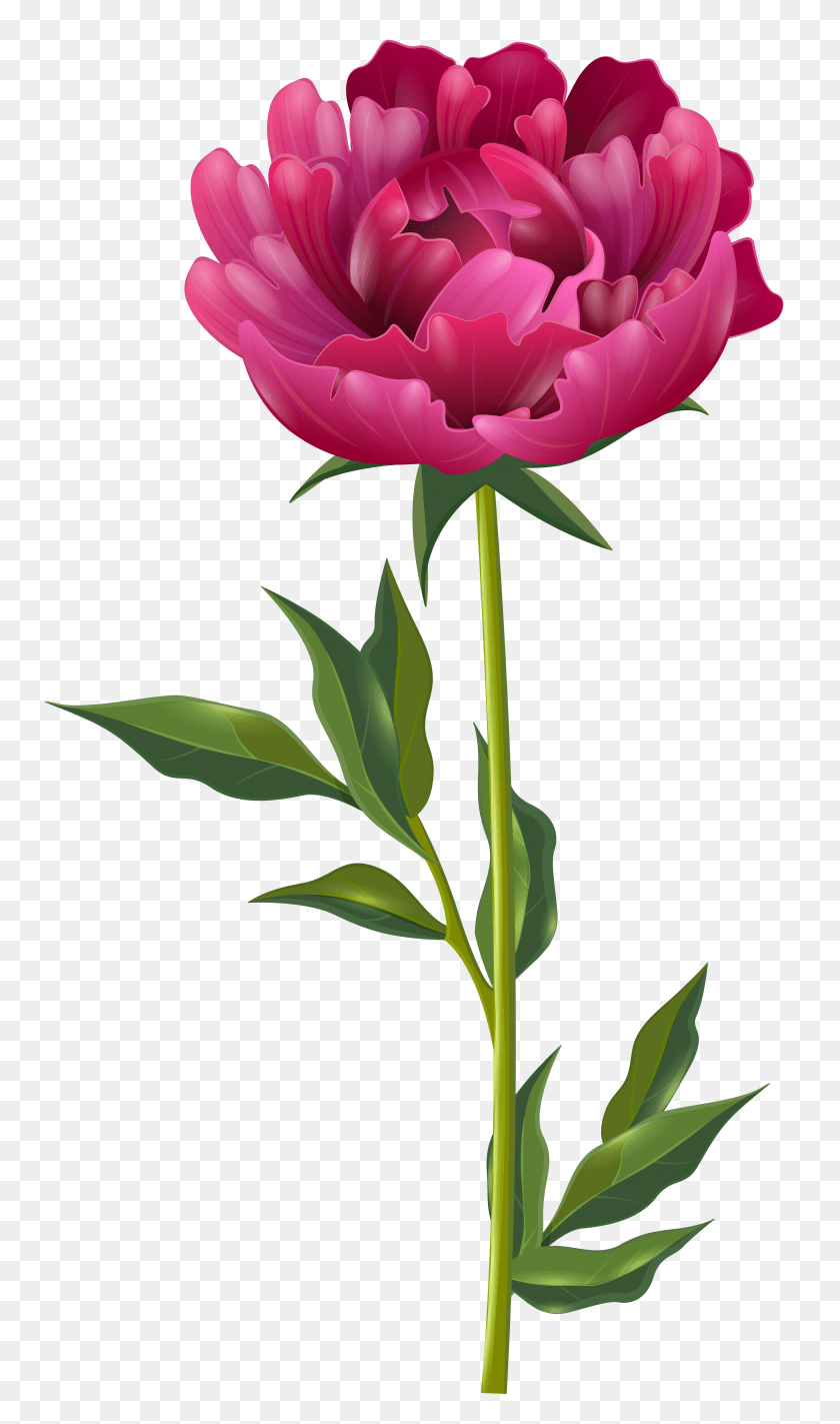 medium resolution of 4576x8000 peony clipart swag peony swag transparent free for download floral swag clipart