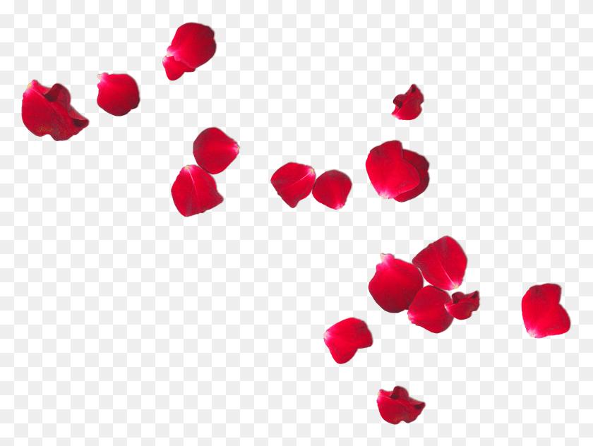 i falling rose petals