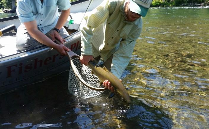 McKenzie River Bull Trout