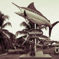 Rompin Sailfish - How it Started