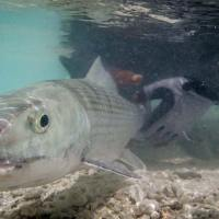 Maldives Fly Fishing Trip Packing Checklist