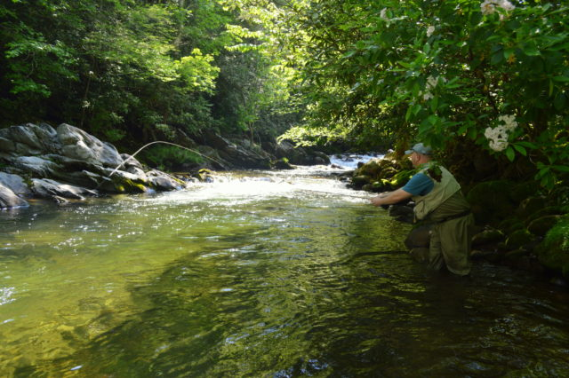 Great Smoky Mountains Fishing Report June 1st, Fly Fishing Gatlinburg Pigeon Forge Great Smoky Mountains National Park, Great Smoky Mountains Fishing Report May 10th