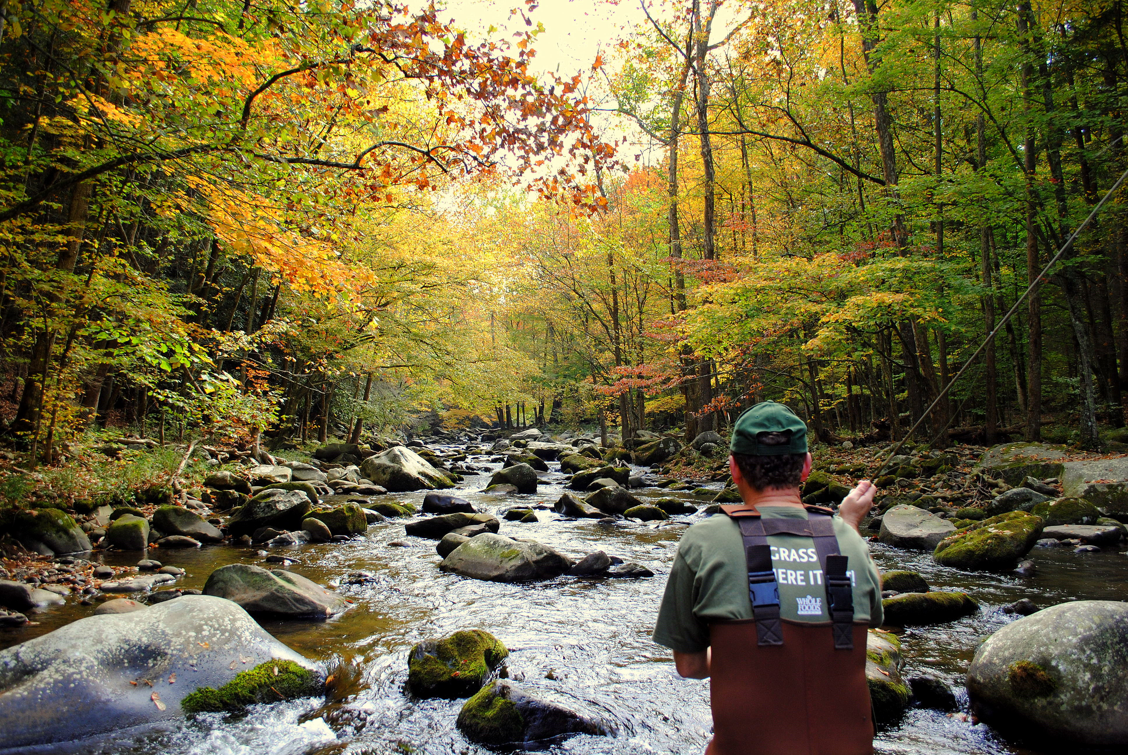 Smoky mountain fly fishing destinations guided trout for Fishing in gatlinburg tn