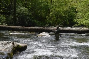 Fly Fishing Hazel Creek, Hazel Creek Fly Fishing Guides