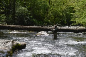 Hazel Creek Camping, Fly Fishing Hazel Creek, Hazel Creek Fly Fishing Guides