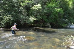 Hazel Creek Fly Fishing Day Trips, Fly Fishing the Smokies Hazel Creek Guides
