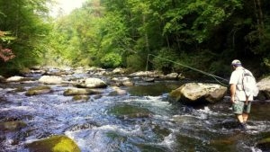 Hazel Creek Day Trip Fly Fishing