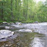 Hazel Creek Fly Fishing Day Trips, Fly Fishing the Smokies Hazel Creek