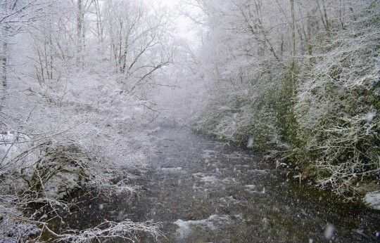 Winter 2016 Fishing Report, January 2016 Fly Fishing Report, Fly Fishing the Smokies, Fly Fishing the Great Smoky Mountains,