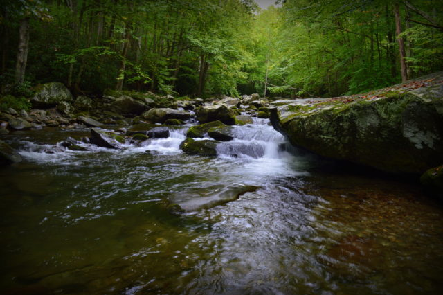 Fly Fishing the Smokies, Great Smoky Mountains Fishing Report 9/21/16