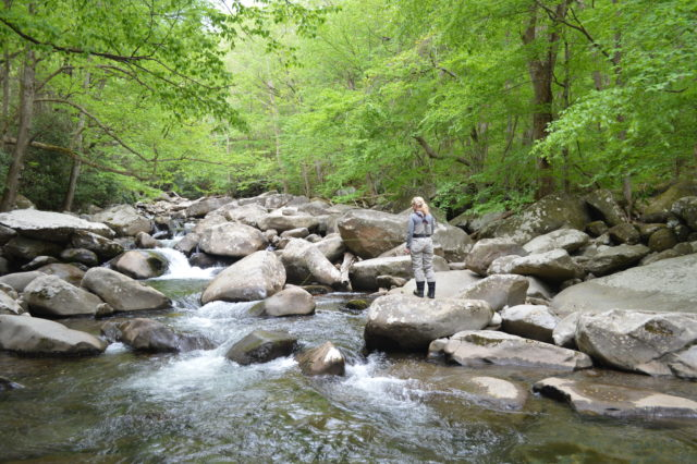 Fly Fishing the Smokies, Smoky Mountain Fly Fiishing Guides, Gatlinburg Fly Fishing Guide, Atlanta Fly Fishing Guides