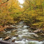 Smoky Mountain Fly Fishing, Fly Fishing the Smokies,
