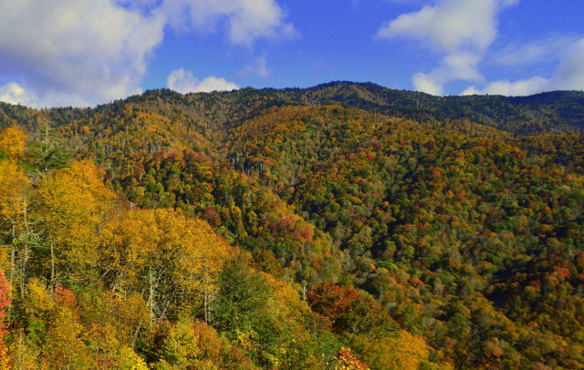 Great Smoky Mountains Fishing Report October 23rd, Fly Fishing the Smokies, Great Smoky Mountains Fly Fishing Report,