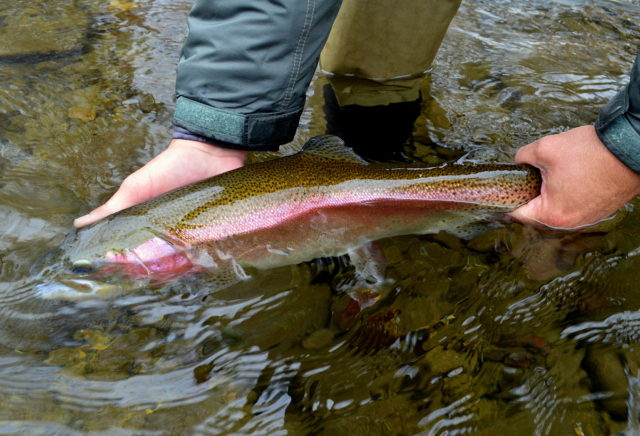 Snow Day Fly Fishing, Fly Fishing the Smokies, Smoky Mountain Fly Fishing Guides Gatlinburg Pigeon Forge Cherokee Bryson City,