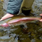 Great Smoky Mountains Fishing Report January, Cherokee Fly Fishing Guides, Gly Fishing the Smokies