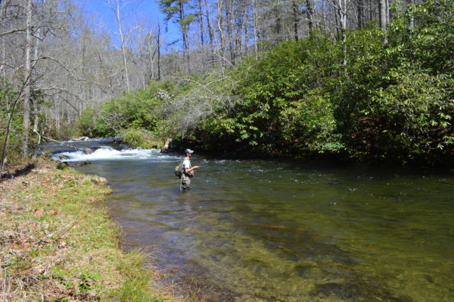 Spring Fly Fishing, Hazel Creek Fly Fishing Guides, Fly Fishing the Smokies, Bryson City Fly Shop, Bryson City Fly Fishing Guides, Smoky Mountain Fly Fishing Guides, Gatinburg Fly Fishing Guides, Pigeon Forge Fly Fishing guides, Cherokee Fly Fishing Guides, Cherokee Fly Shop,