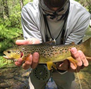 Hazel Creek Fishing Report, Hazel Creek Fly Fishing Guide Trip, Fly Fishing the Smokies