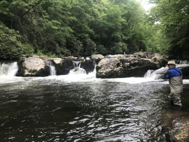 Hazel Creek Fly fishing guided trips, hazel creek fly fishing guides, fly fishing the smokies,