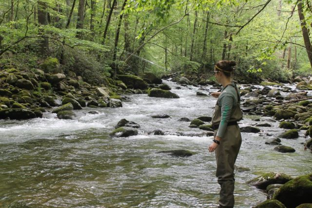 Great Smoky Mountains Fishing Report June 1st, Fly Fishing the Smokies, Bryson City Fly Fishing, Fly Fishing near Gatlinburg,