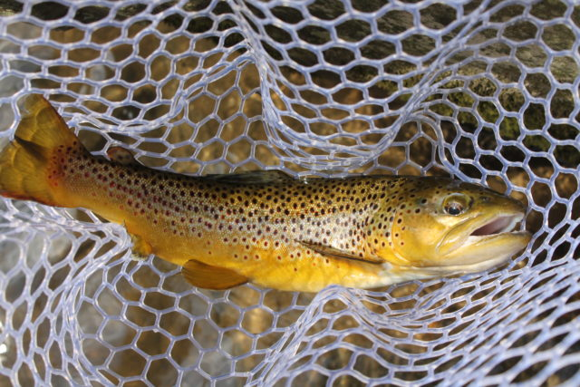 Spring Fishing, Nantahala River Fly Fishing Guide Trips