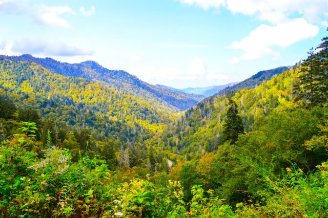 Smokies Fall Colors, Fall Colors starting in the Great Smoky Mountains