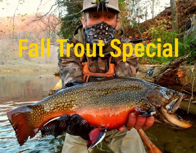 Gatlinburg Fly Fishing Guides, Smoky Mountain Fly Fishing, Fly Fishing the Smokies, Fall Trout Special, Brook Trout, Great Smoky Mountains Fly Fishing Guides, Bryson City Fly Shop, Smoky Mountain Fly Shop,