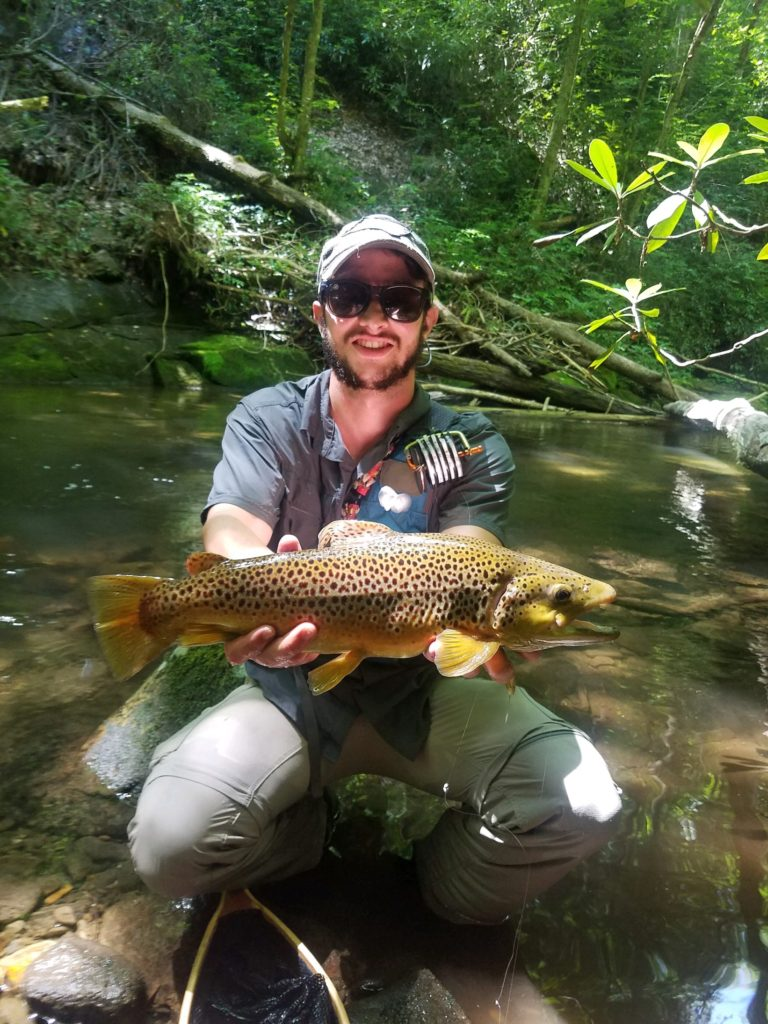 Great Smoky Mountains Fishing Report, Smoky Mountain Brown Trout, Fly Fishing the Smokies, Bryson City Fly Shop,