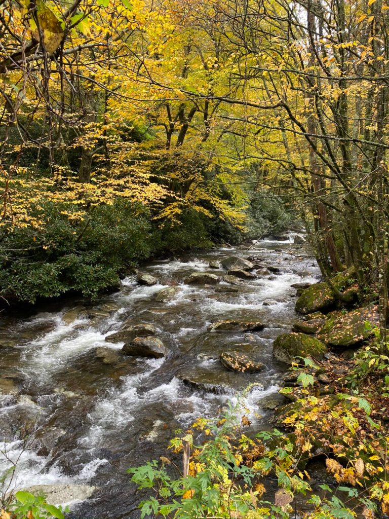 Smoky Mountains Fly Fishing Report, Fly Fishing the Smokies, October Fly Fishing, October Fly Fly Fishing Report, Gatlinburg Fly Fishing Guides, Gatlinburg Fly Shop, Bryon City Fly Fishing Guides, Bryson City Fly Shop, Cherokee Fly Fishing Report,