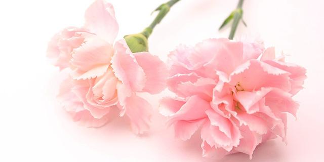 carnation_pink