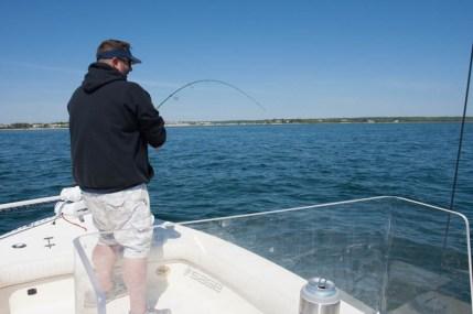 Buzzards Bay Striped Bass