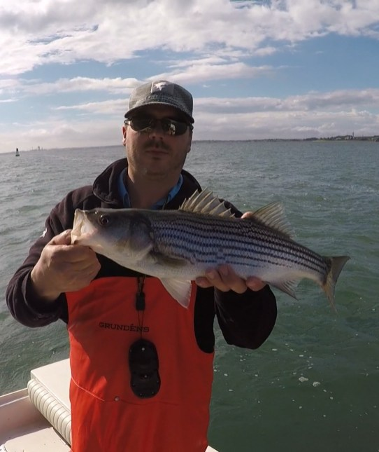 Another schoolie of the day on the fly in Boston Harbor