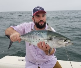 Another Martha's Vineyard False Albacore on the fly