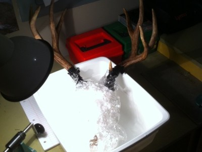 Diy Low Cost European Deer Skull Mount Do It Yourself