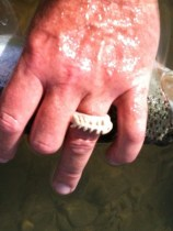 ... nice fish ring!