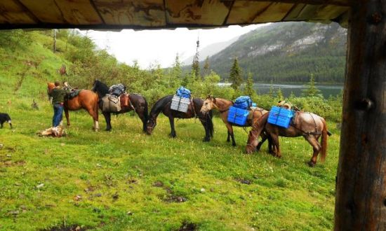 Palace in the Sky - BC Alpine Fly Fishing Report 2016 - Guide Horses