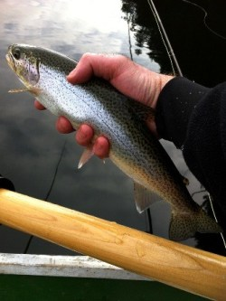 Fly Fishing Cutthroat Trout - Spotted Cutty