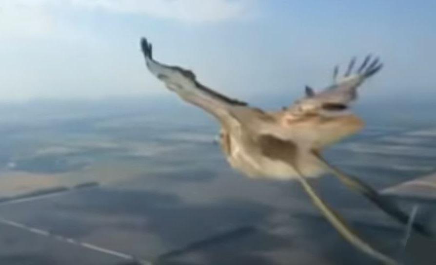 B737 Hits Bird of Prey