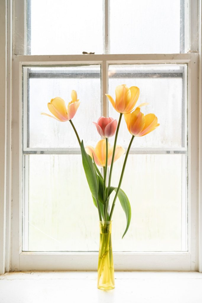 yellow and red tulips in front of white wooden framed glass window