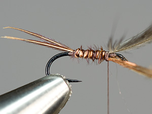 Simple emerger step 5