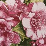 Camellias Embroidered on Textile