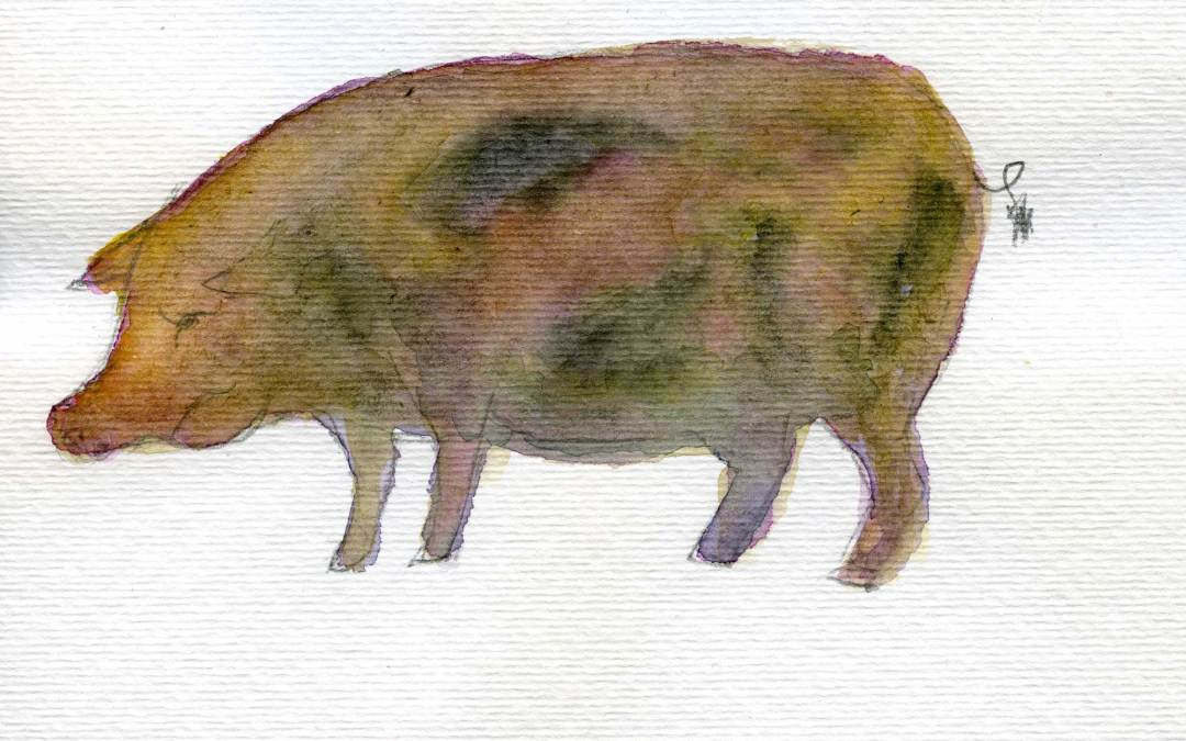 Pig – Daily painting #479 (SOLD)