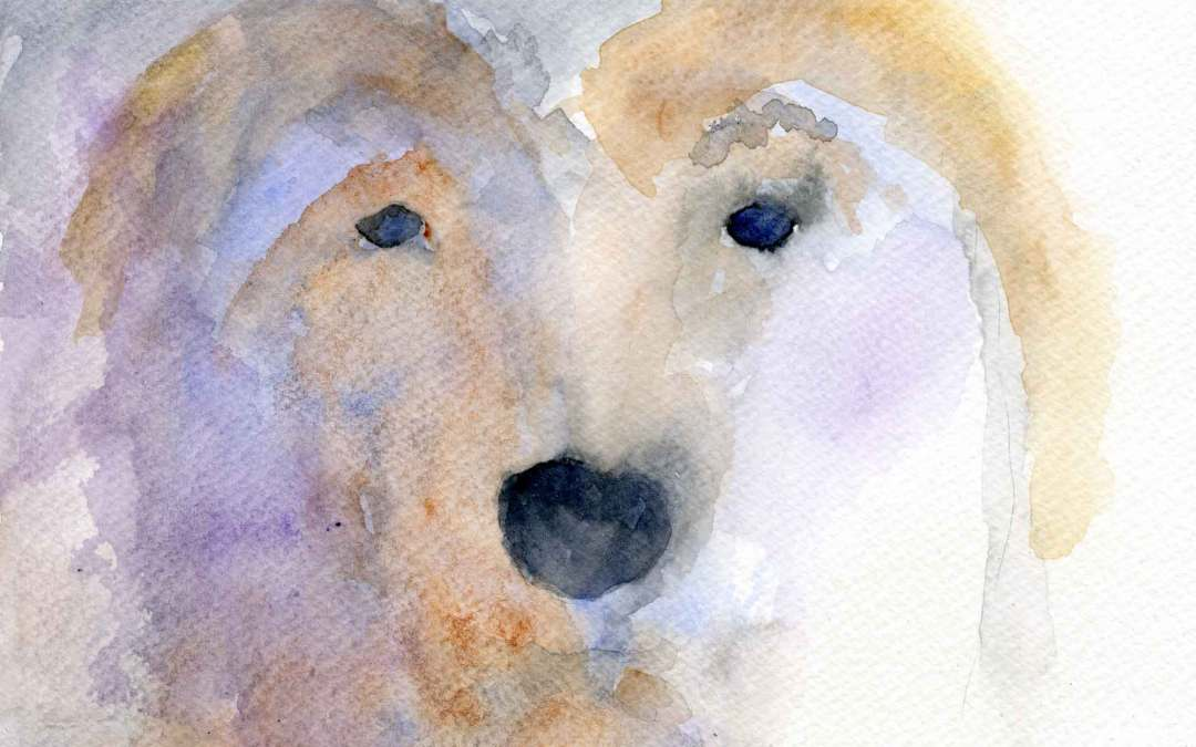 Dog – Daily painting #647  (SOLD)