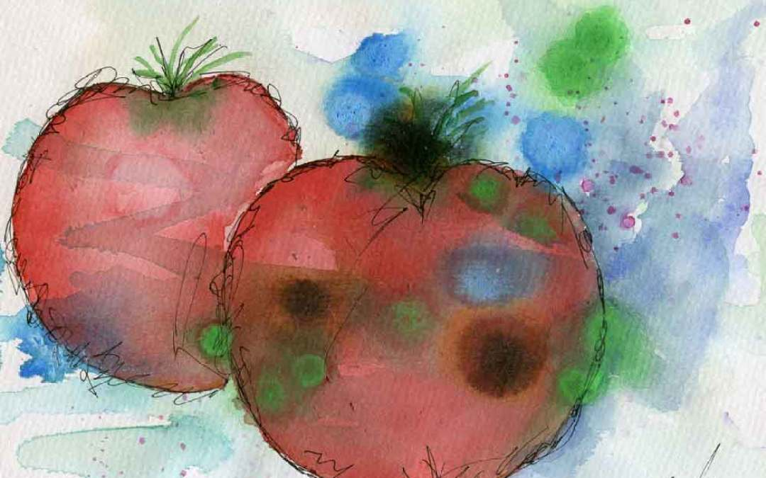 Two tomatoes #2 – Daily painting #779