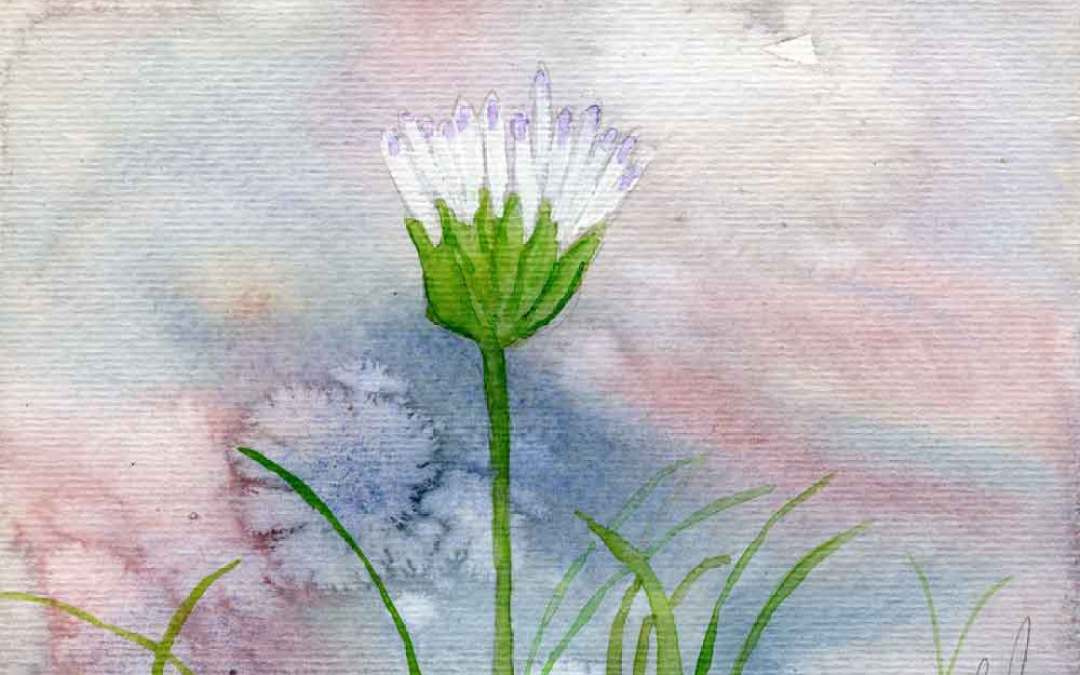 Opening Daisy – Daily Painting #849  (SOLD)